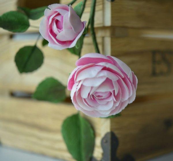 Suzanne Esper Rose 2